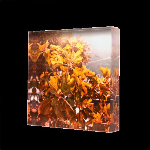 Acrylic glass block Figue Tree