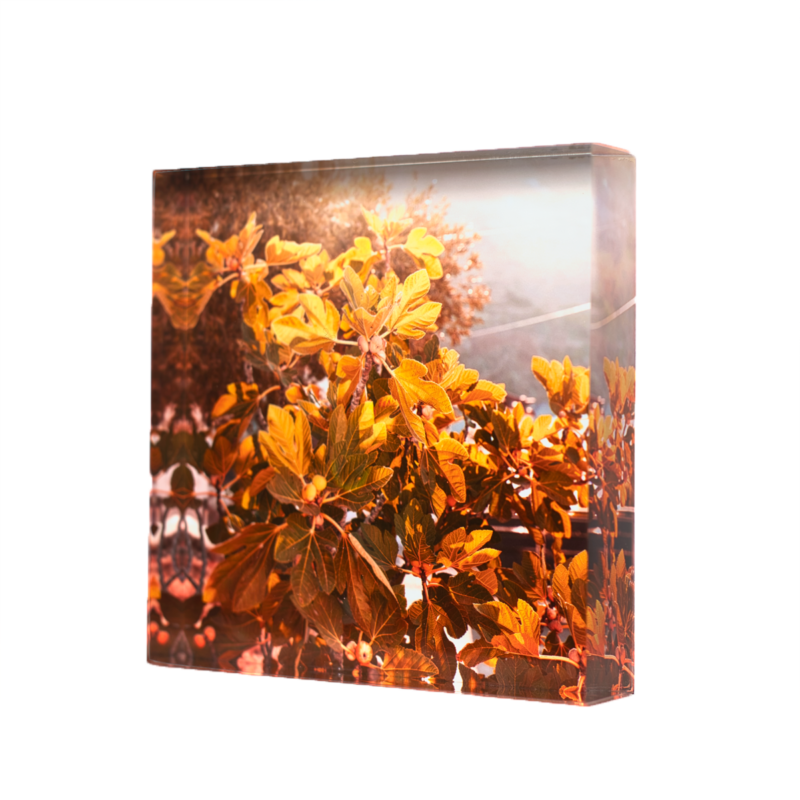 Acrylic glass block Figue Tree