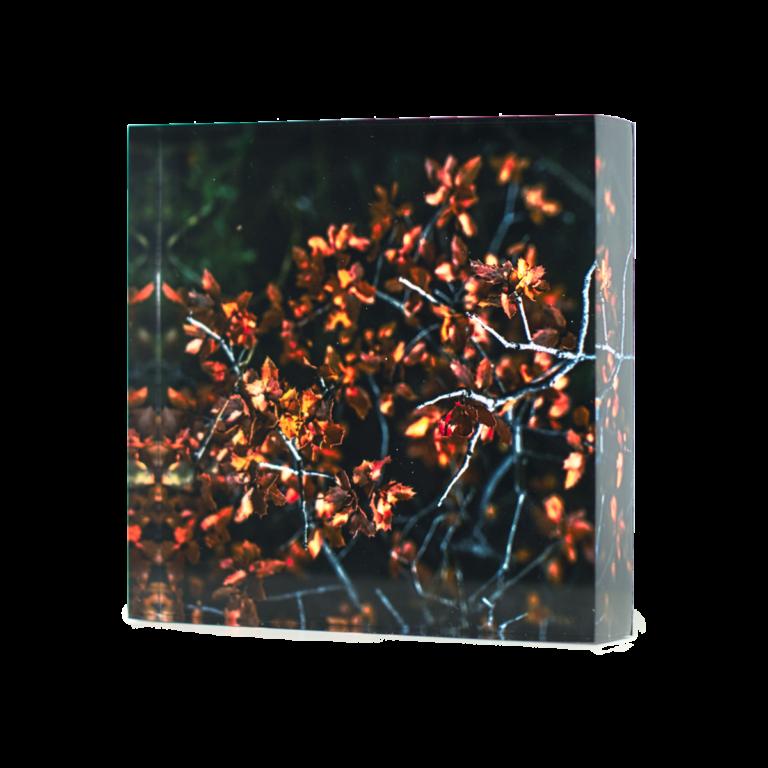 Acrylic-glass-photo-block-Golden-Leaves