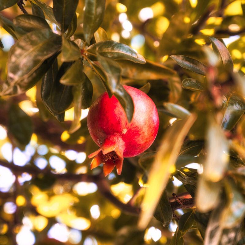 Acrylic-glass-block-Pomegranate